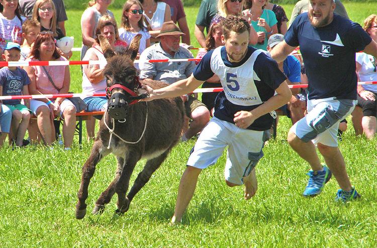 Eselrennen Hh19 T