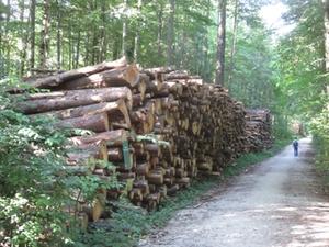 Holzlager Forst