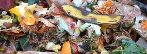kompost-biotonne