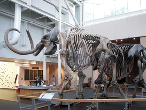 mammut-museum