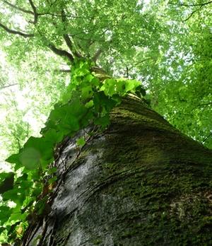 Matuluswald Baum