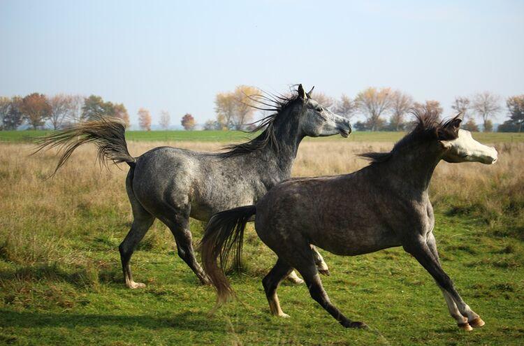 Pferde Ausbruch