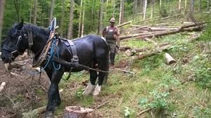 pferderueckung-im-schutzwald-005