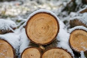 Rodung Bäume