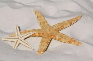 Urlaub Sand Stern