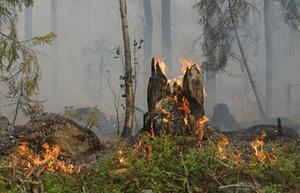 Waldbrand Feuer