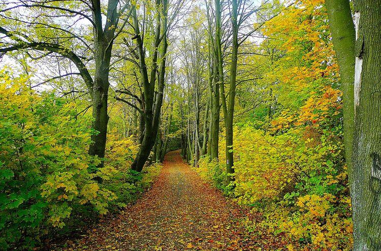 Waldweg Forst