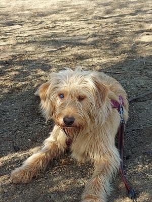Hund weggelaufen Pietling